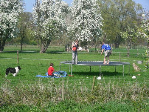 De trampoline in de wei bij Maudsplekje